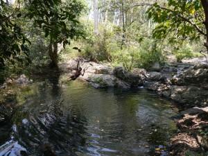 Banlung Dschungel-Trekking: lokaler Guide nimmt ein Bad