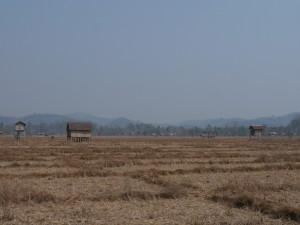 Banlung: Taphuandorf Kachon, Reisfelder