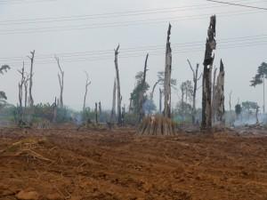 Battambang - Koh Kong: Unterwegs, gerodetes Gebiet