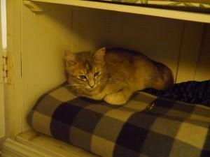 Glenburn: Katze in unserem Kleiderschrank