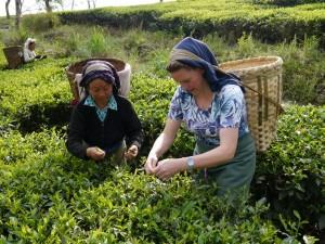 Glenburn: Bea mit Lehrerin beim Teepflücken