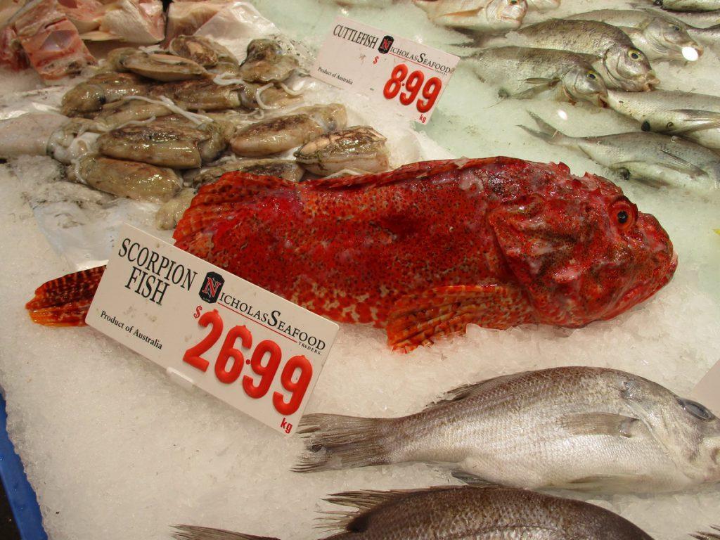 Sydney - Fischmarkt Skorpionfisch