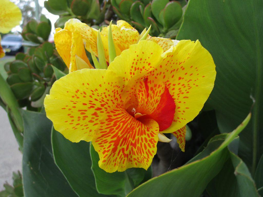 Farbige Blume