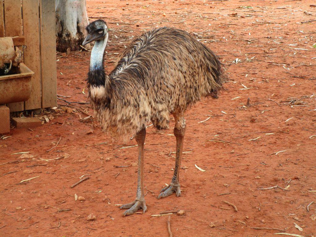 Unterwegs - Emu